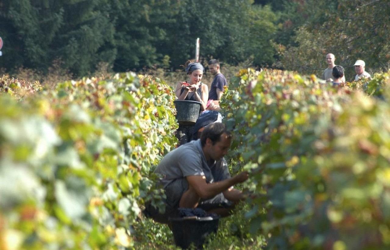 Burgundy Harvest-min